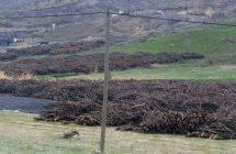 """Migliaia di alberi da frutta distrutti per """"ragioni di sicurezza"""" nella regione curda della Turchia"""