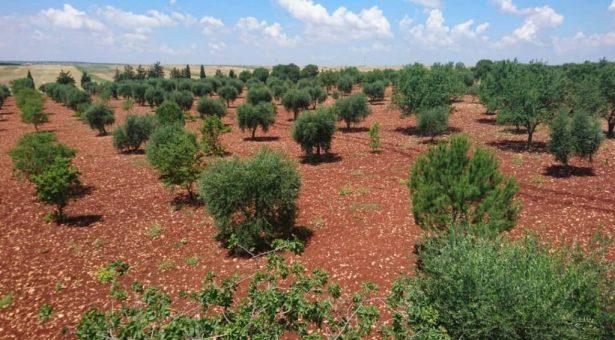 Piano commerciale per la svendita di olive di Efrîn verso la Spagna
