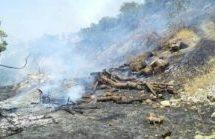 HDP e DTK: i soldati turchi bruciano deliberatamente le foreste