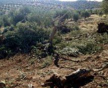 L'esercito di occupazione turco sradica gli alberi e minaccia la popolazione