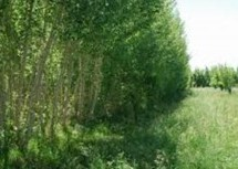 A Ercis, verranno tagliati 200 mila alberi