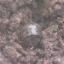 L'esercito turco usa bombe a grappolo a nella regione di Bradost