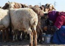 Beduini nel nord della Siria: lontano dalla tecnologia