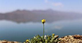 Le milizie kurde e il controllo del territorio