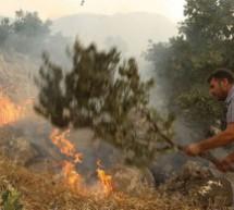 10.000 ettari bruciati in Kurdistan dall'esercito turco-delegazione internazionale necessaria più che mai!