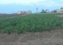 Sviluppi rivoluzionari nell'agricoltura e nell'allevamento del bestiame nel Rojava
